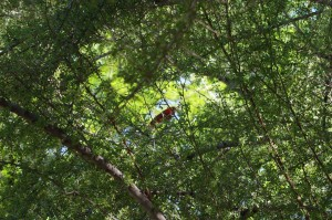 A bright, red cardinal chirps in a tree off the main trail.